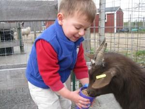 William at Davis Farms